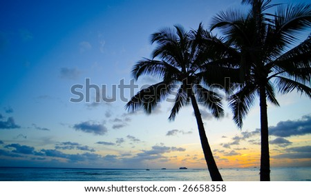 Palm trees and sunset
