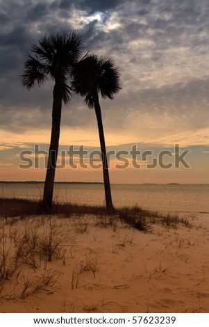 Palm Trees and Sunset in Panama City, Florida