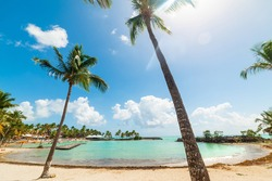 Palm trees and white sand in Bas du Fort beach in Guadeloupe, French west indies. Guadeloupe is an archipelago that is part of the Lesser Antilles in the Caribbean sea