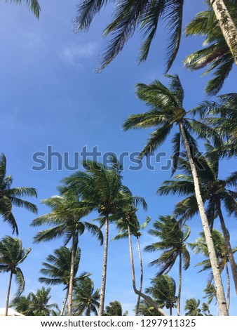 Palm trees are one of the main livelihood in the Surigao Del Norte.