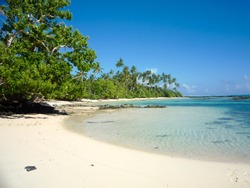 Palm trees at a Paradise beach in the caribean island of Aruba