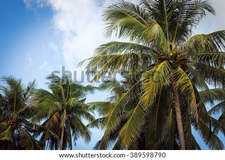 Palm trees at blue cloudy sky on tropical coast on sunset #389598790