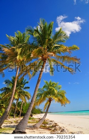 Palm trees at Paradise Beach #70231354