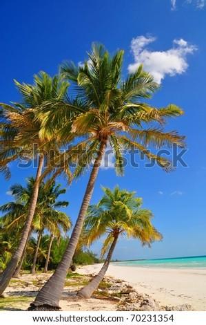 Palm trees at Paradise Beach #70231354