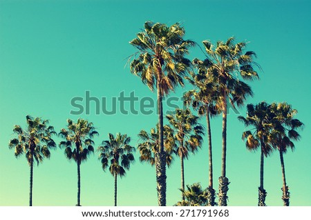 Palm trees at Santa Monica beach. Vintage post processed. Fashion, travel, summer, vacation and tropical beach concept. #271791968