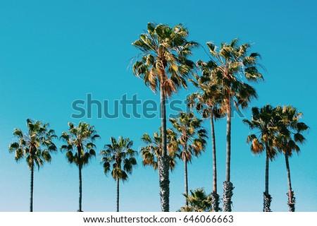 palm trees at santa monica...