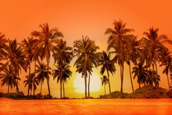 Palm trees at sunset background.  Sri Lanka.