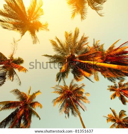 Palm trees at sunset light #81351637