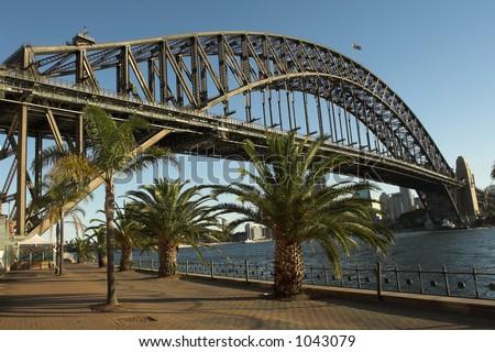 Palm Trees at Sydney Harbour, Australia