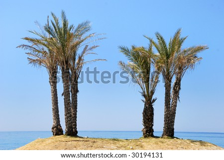 Palm trees at the seaside on an island with clear blue sky