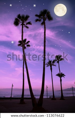 Palm trees  at the tropical night, Las Americas, Tenerife