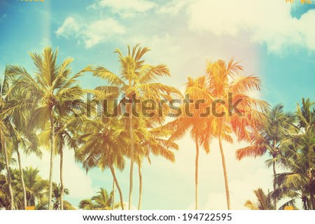 palm trees at tropical coast ...