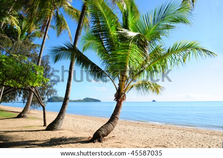Palm trees at tropical Palm Cove beach with view on Double Island, Australia