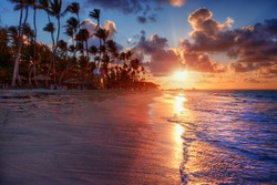 Palm trees blowing in the sea breeze at sunset on a luxurious sandy beach shore