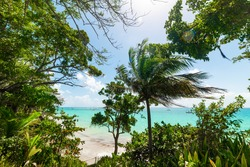 Palm trees by La Datcha beach shore in Guadeloupe, French west indies. Guadeloupe is an archipelago that is part of the Lesser Antilles in the Caribbean sea