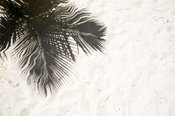 Palm trees cast shadows on the smooth golden sand of a remote tropical island beach in Dominicana republic