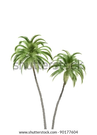 palm trees couple