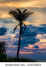 Stock photo of palm trees in fornt of sunrise sky