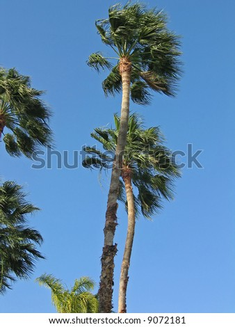 Palm trees from a down angle