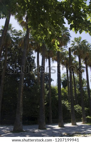 Palm trees from the national garden of Athens. Palms are one of the best known and most widely planted tree families.