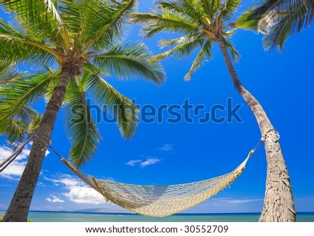 Palm Trees, Hammock, and Blue Sky, Beautiful Tropical Vacation