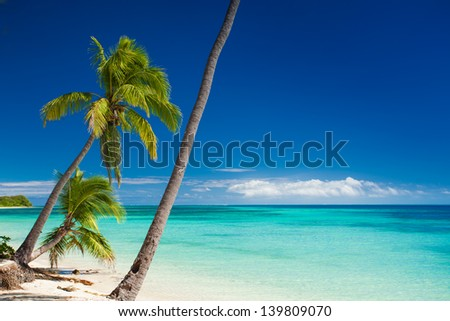 Palm trees hanging over deserted tropical beach
