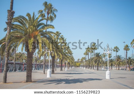 Palm Trees in Barcelona #1156239823