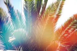 Palm trees in beautiful summer warm sunset. Summer holiday vibes. happy vocation