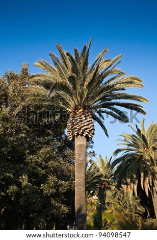 Palm trees in Finale Ligure, liguria, Italy.