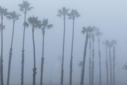 Palm trees in fog, on the beach