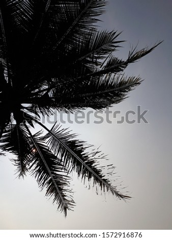 palm trees in indonesian,In Indonesia, coconut is very fertile, and is a source of livelihood