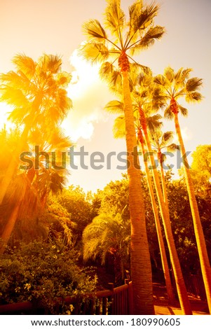 palm trees in jungle on...