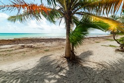 Palm trees in Le Saline beach in Guadeloupe, French west indies. Guadeloupe is an archipelago that is part of the Lesser Antilles in the Caribbean sea