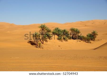 Palm trees in Libya
