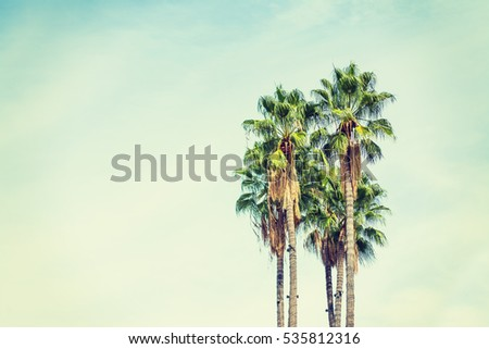 palm trees in los angeles in...