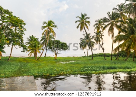 Palm trees in Ologa village, in Maracaibo lake, Venezuela