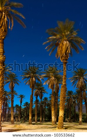 Palm trees in the desert at night with star trails, moonlight and a deep blue sky.  Long exposure shot at midnight under a full moon.