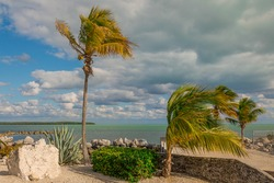 Palm Trees in the Keys
