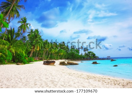 Palm trees in tropical perfect beach at Koh Kood , Thailand