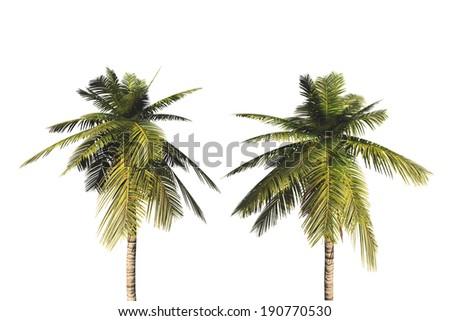Palm trees, isolated on white background. #190770530