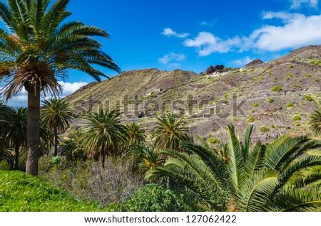 Palm trees mountain valley trekking, Taguluche village, La Gomera, Canary Islands