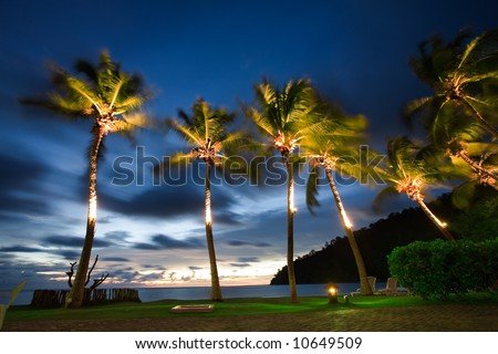 Palm trees move in the breeze of a SE Asian evening (movement blur)
