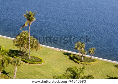 Palm trees near the sea shore
