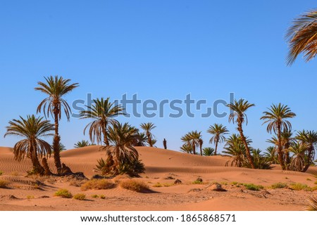 Photo of  Palm trees next to a little oasis in the Sahara Desert, Morocco
