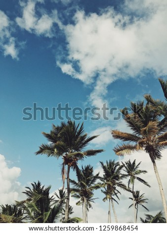 Palm trees of Juanillo beach under heavy sky with clouds and sun in stormy weather in Dominican republic. Photo is vintage with saturated colors #1259868454