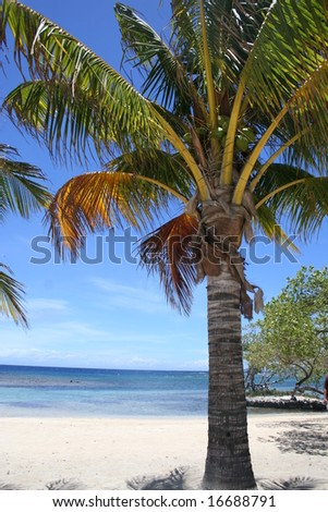 Palm Trees on a Beach in the Caribbean