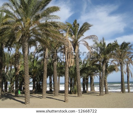 Palm Trees on a Beach in Torremolinos, Spain
