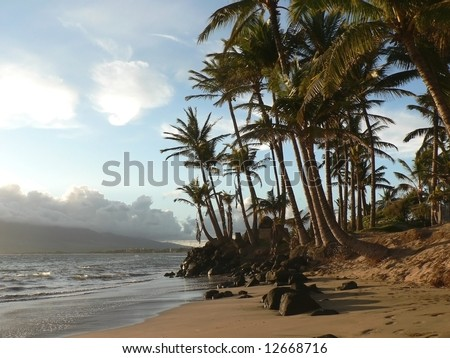 Palm Trees on a Hawaiian Beach