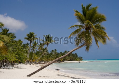 Palm trees on a tropical beach (Saona Island, Domenican Republic)
