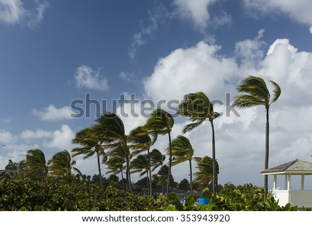 Palm trees on a windy day
